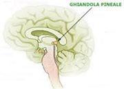 La Ghiandola Pineale, il terzo occhio che regola i cicli cicardiani degli altri ormoni