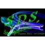 Logo S.D.S.di Di Giacomo Andrea