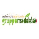 Logo dell'attività GRUPPO MADDALO SRL