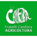 Logo dell'attività Prodotti per l'agricoltura e la zootecnia, nonché Pellet, bombole di GPL ad uso domestico etc.