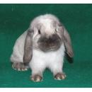 Logo dell'attività conigli da affezione