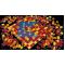 Logo social dell'attività Ceramiche Grigoli Severino