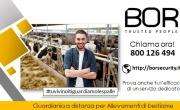 Come proteggere un'azienda di allevamento di bestiame