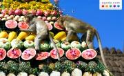 Festival delle Scimmie di Lopburi, offerte per gli hotel della zona da Agoda.com